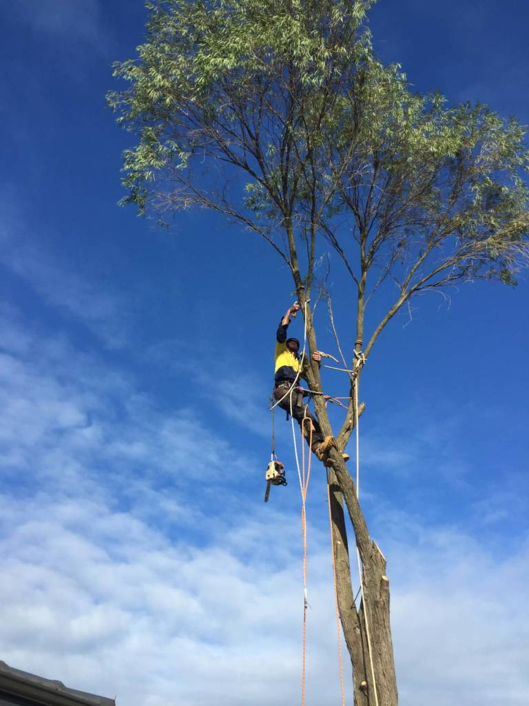 Ace's Tree & Garden Service - Tree Cutter in Top of a Tree