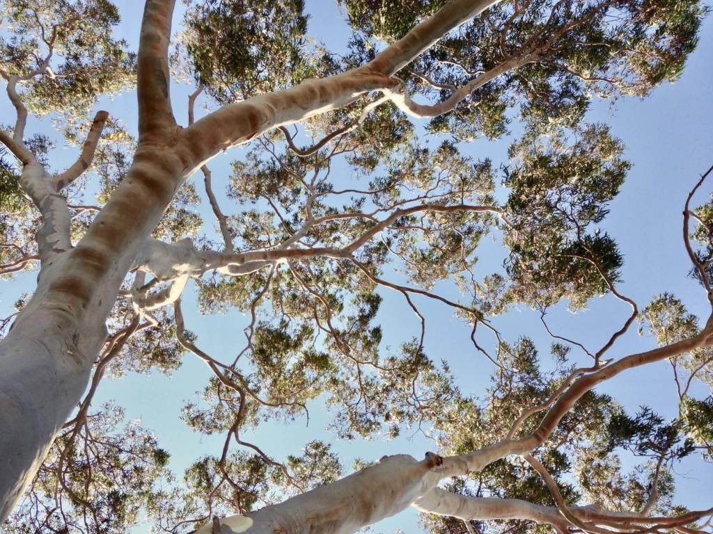 Ace's Tree & Garden Service - Tree Image