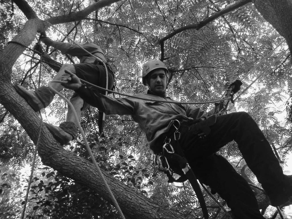 Ace's Tree & Garden Service - Tree Looping Experts Climbing in Trees