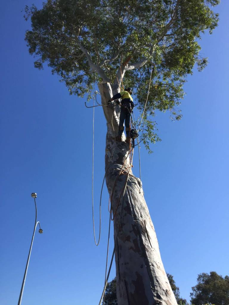 Ace's Tree & Garden Service - Tree Lopping, Topping and Tree Clearing