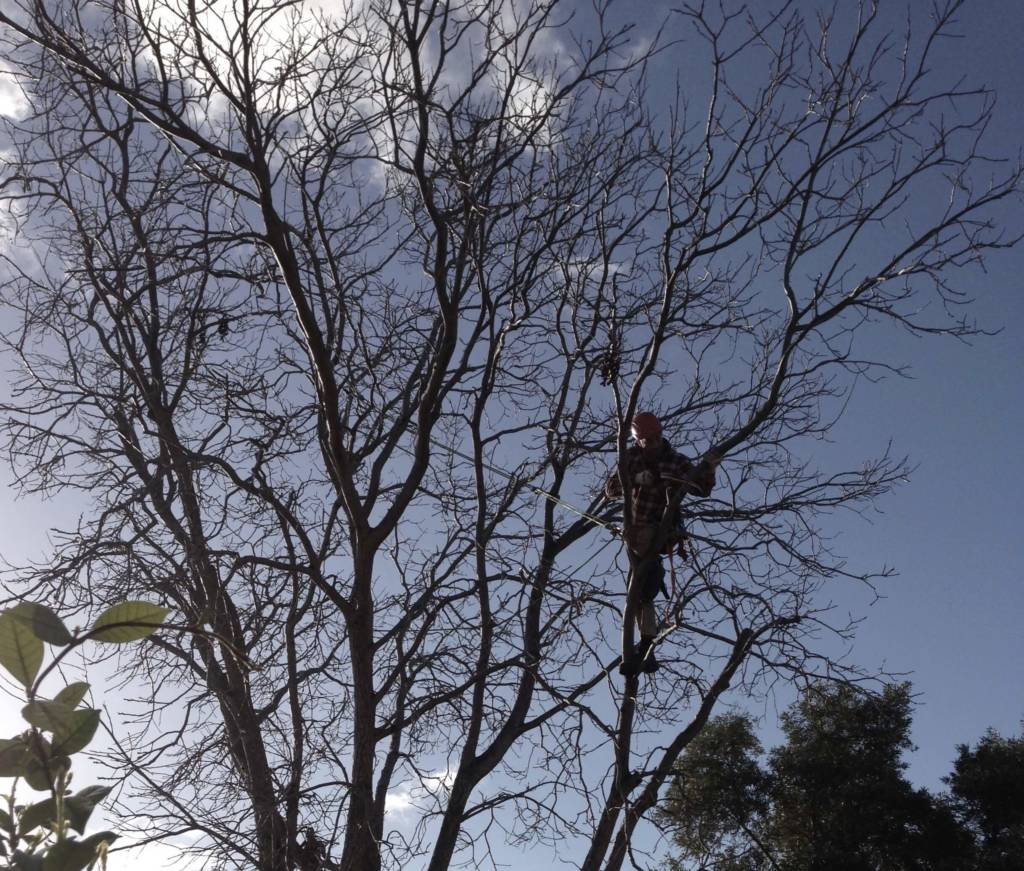 Ace's Tree & Garden Service - Tree Pruning