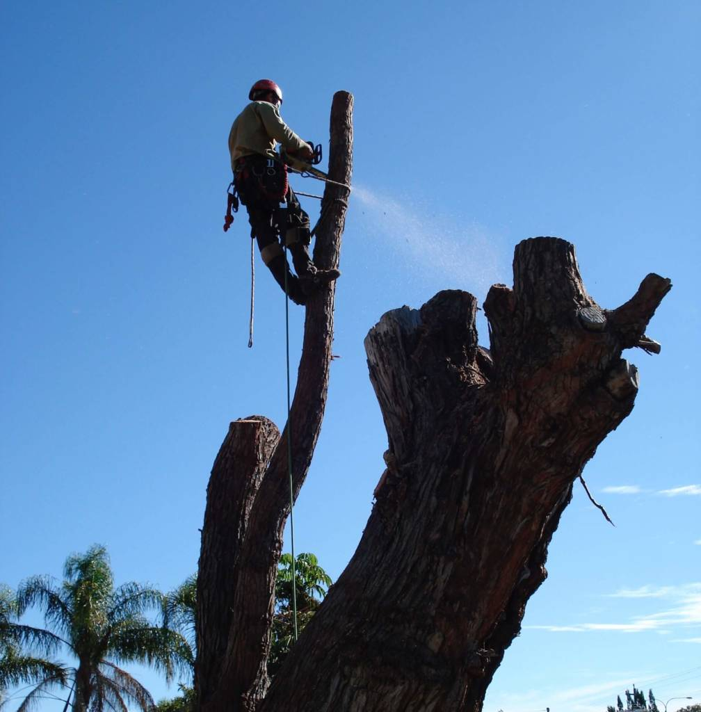 Ace's Tree & Garden Service - Tree Pruning and Cutting
