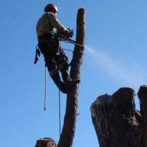Ace's Tree & Garden Service - Tree Removal and Tree Cutting