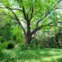 Botanical,Garden